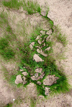 Green Grass Growing From Cracked Earth. New Life. ... Dry Land, Global Warming, Agriculture Concept