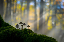 Foreste Casentinesi National Park, Badia Prataglia, Tuscany, Italy, Europe. Mushrooms On Trunk Covered With Moss.