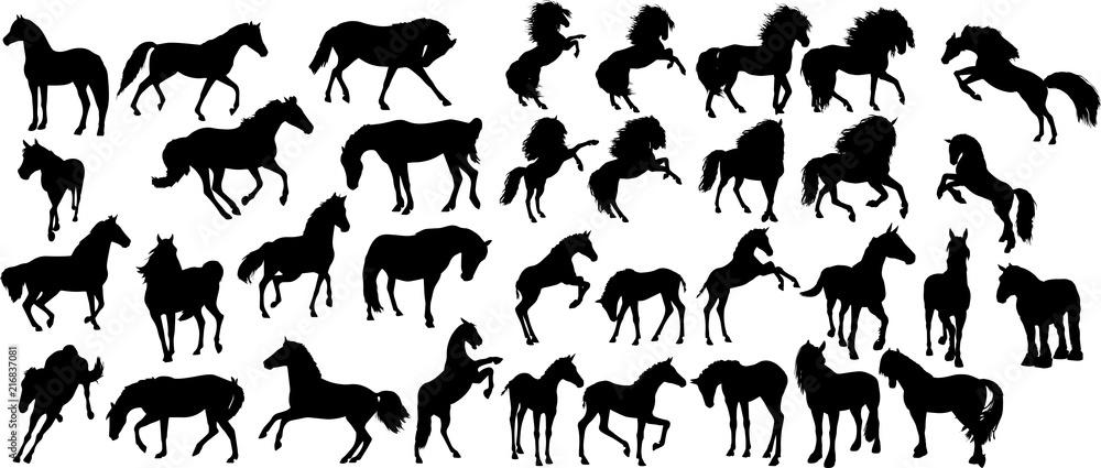 Fototapety, obrazy: 馬のシルエット