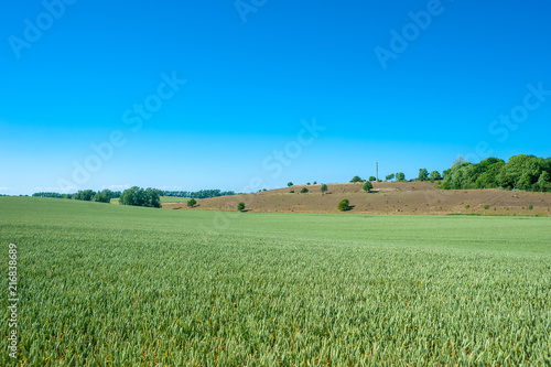 Landscape with grainfield at Cape Arkona