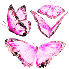 beautiful pink butterflies, set, watercolor, isolated on a white