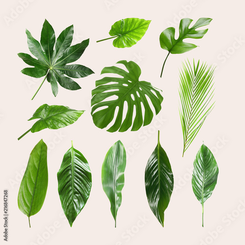 Fototapety, obrazy: Set of different tropical leaves on light background