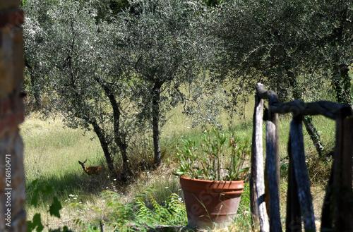 Fotobehang Ree Zutrauliches Reh unter einem Apfelbaum vor einer Gartenterrasse