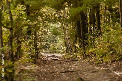 Keuken foto achterwand Verenigde Staten Canopied trail leading to clearing