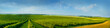 canvas print picture - panoramica view ofcolorful fields and rows of currant bush seedlings as a background composition