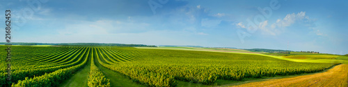 Foto op Canvas Cultuur panoramica view ofcolorful fields and rows of currant bush seedlings as a background composition