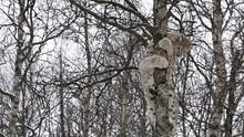 Lynx Climbing Tree Close Up View