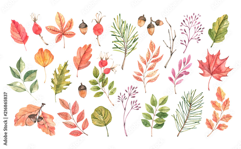 Fototapety, obrazy: Hand drawn watercolor illustration. Set of fall leaves, acorns, berries, spruce branch. Forest design elements. Hello Autumn! Perfect for seasonal advertisement, invitations, cards