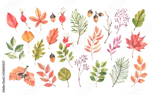 Hand drawn watercolor illustration. Set of fall leaves, acorns, berries, spruce branch. Forest design elements. Hello Autumn! Perfect for seasonal advertisement, invitations, cards - 216865837