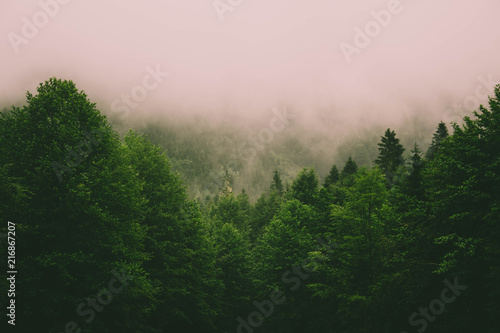 Poster Lichtroze Mystic landscape of evergreen forest
