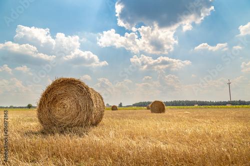 Fototapeta snopki słomy w polu, żniwa obraz