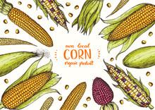 Corn On The Cob Hand Drawn Vector Illustration. Top View Frame. Corn Set Illustration. Colored Corn, Vintage Design Template.
