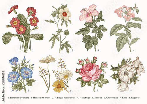 Botany Fototapeta