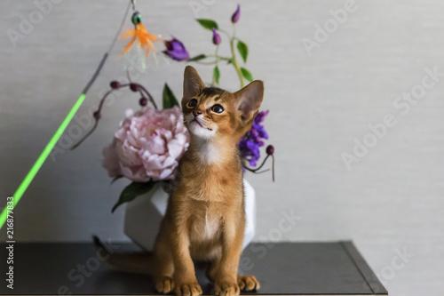 Foto op Aluminium Imagination red cat with flower vase