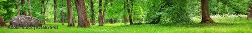 Obraz park panorama with trees and green foliage. woods in summer - fototapety do salonu