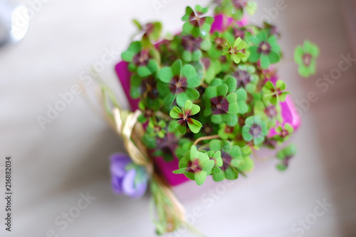 Purple pot with four leaf clovers