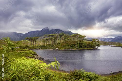 Foto op Plexiglas Europa Pine Island, Connemara National Park