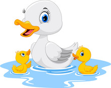 Mother Duck Swims With Her Two Little Cute Ducklings