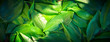Leinwanddruck Bild Fresh garden leaves lily valley organic gardening background