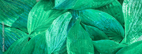 Fotografija  Fresh garden leaves bell organic gardening background