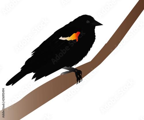Red-winged Blackbird Wallpaper Mural