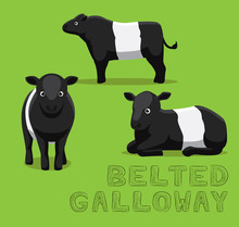 Cow Belted Galloway Cartoon Ve...