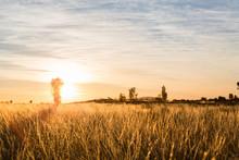 Warm Sunrise Over Field