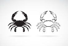 Vector Of Two Crab On White Ba...