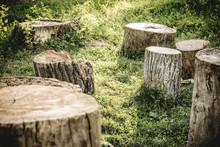 Closeup Tree Stumps Among A Fo...