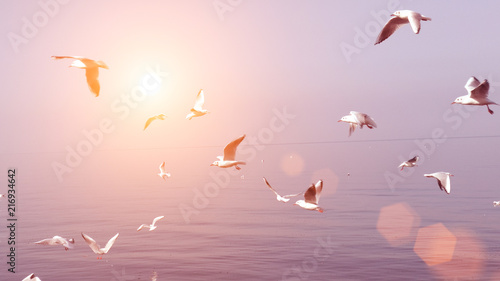 Poster Rose clair / pale Seagulls flying over the sea at the sunset