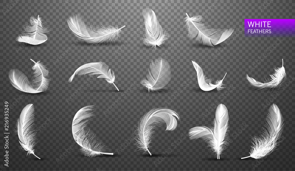 Fototapeta Set of isolated falling white fluffy twirled feathers on transparent background in realistic style. Vector Illustration