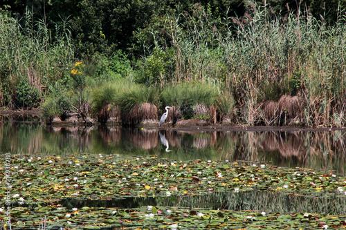 Parco naturale dei Lagoni di Mercurago, Arona, Italia Canvas Print