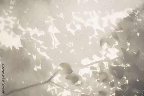 Tree leaves shadow on white wall Nature Abstract background