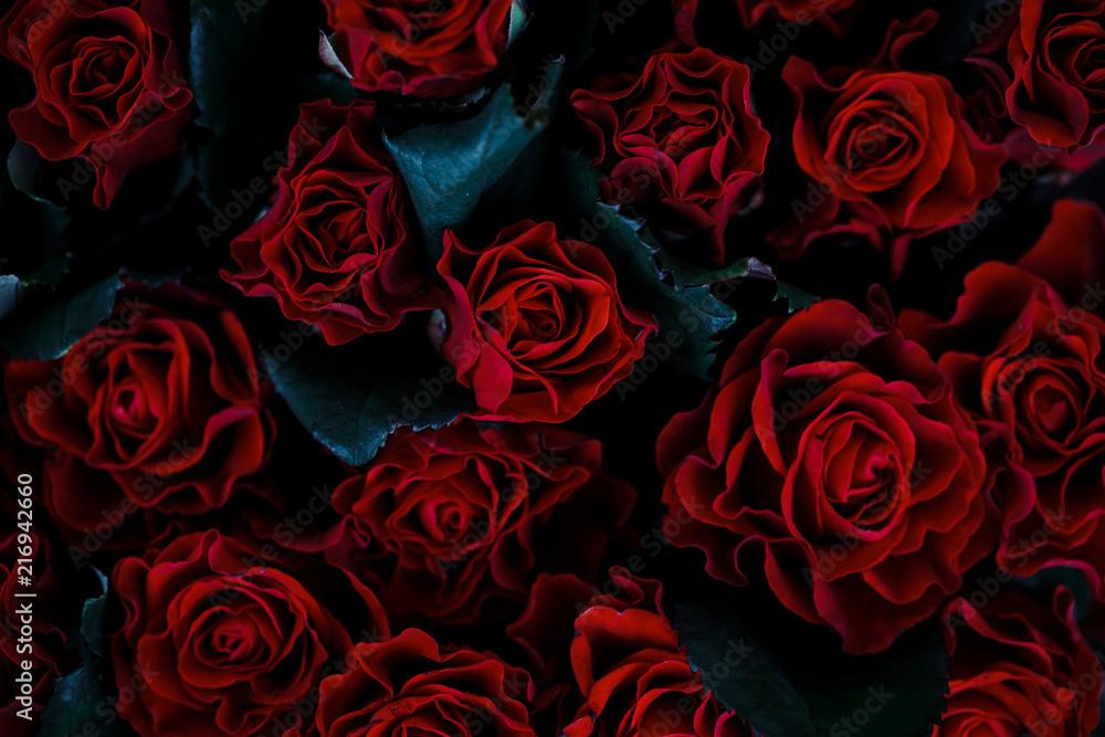 Fototapety, obrazy: Red rose