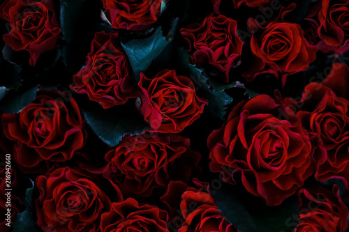 Canvas Prints Roses Red rose
