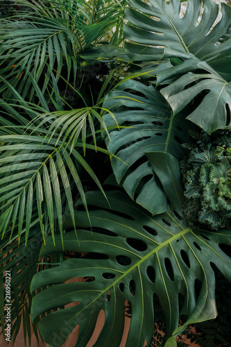 Fotobehang Natuur Green tropical leaves nature backdrop, floral arrangement with Monstera, palm frond and ornamental foliage plants on pink pastel background.