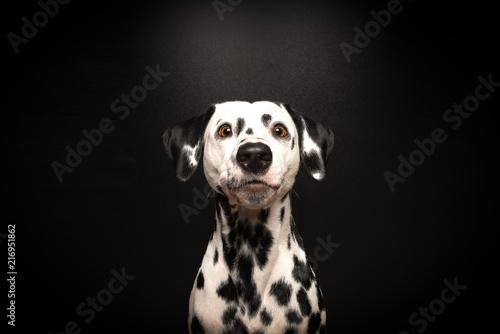 Fotografia  Dalmatiner wartet auf Belohnung