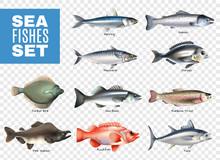Sea Fishes Transparent Set