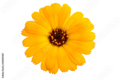 orange calendula flower isolated on the white Wallpaper Mural
