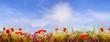 Mohnblumen in der Sonne auf einem Feld