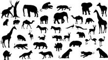 Wild Animals Silhouette