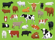 Various Cow Bull Cattle Poses ...