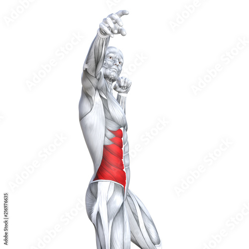 Fotografie, Tablou  Concept conceptual 3D illustration chest fit strong human anatomy or anatomical