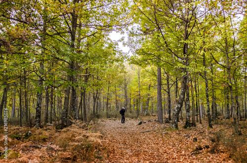 El fotógrafo está tomando una foto de un paisaje del otoño en el castañar de El Tiemblo, España  © DoloresGiraldez