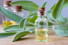 A Bottle Of Sage Essential Oil With Fresh Sage