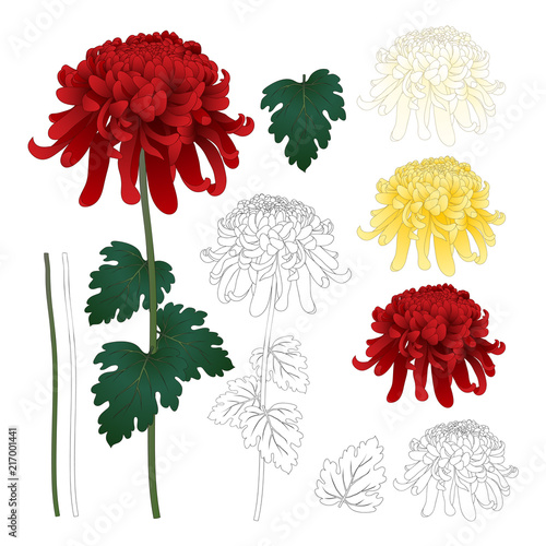 Fotografie, Obraz Red, White, Yellow Chrysanthemum with Outline