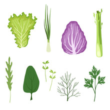 Salad Greens And Leaves Set, Vegetarian Healthy Organic Herbs And Leafy Vegetables For Cooking Vector Illustrations On A White Background