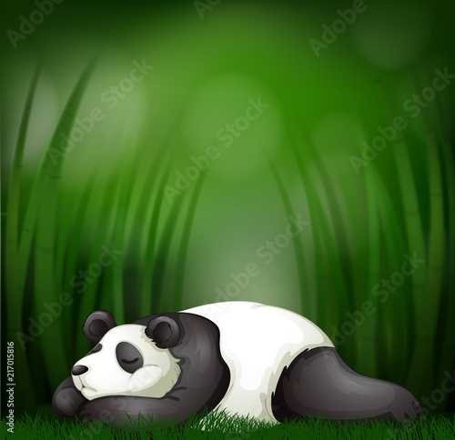 Fotobehang Kids Sleeping panda on bamboo template