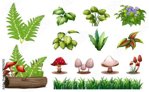Canvas Prints Kids Set of forest plants