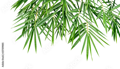 Tropical plant green bamboo leaves isolated on white background, nature backdrop, clipping path included - 217019885